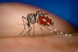 How Many Symptoms, Causes and Treatment of Dengue Fever