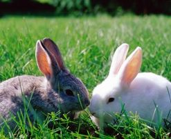 How to Take Care of a Bunny Rabbit as a Pet with No Mother