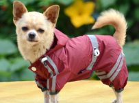dog raincoats with legs uk